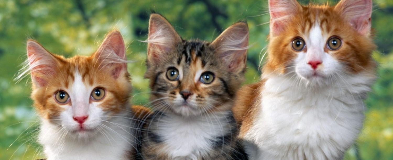 Cats Universe