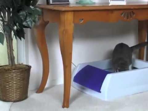 large cat litter furniture